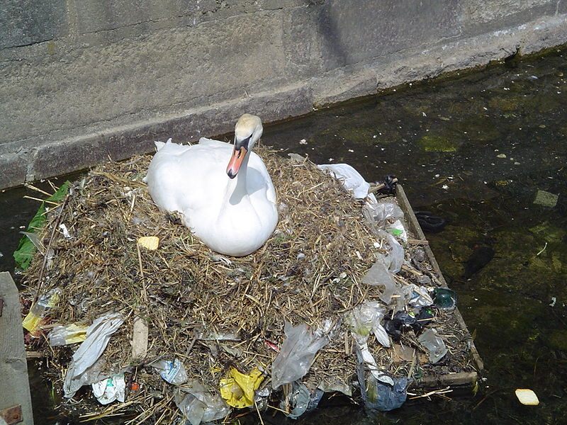 A swan on a nest with plastic bags in it.