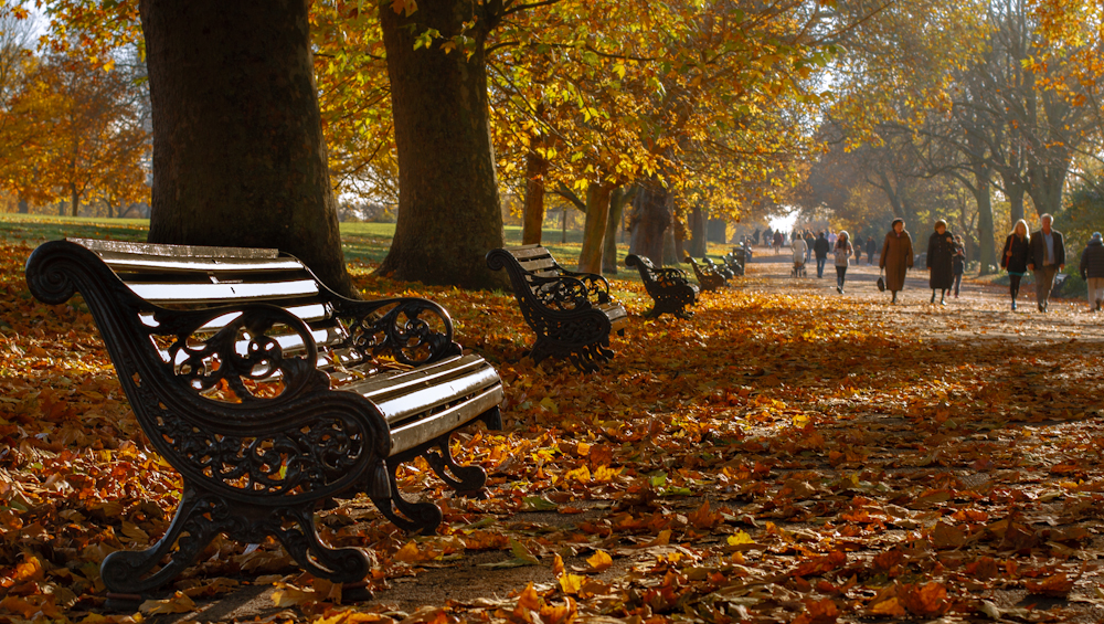 Park benches surrounded by leaves