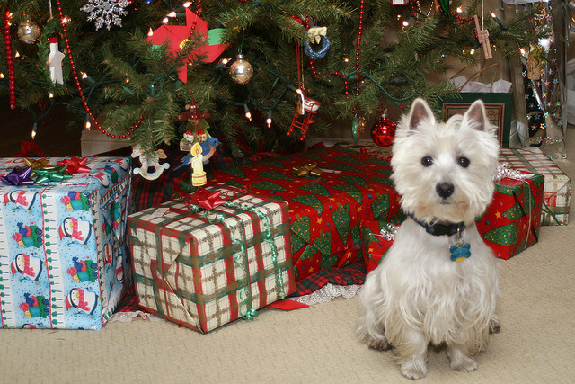 Picture taken by Randy Robertson and titled 'Wee Westie Christmas 2007': http://www.flickr.com/photos/randysonofrobert/2137548043/
